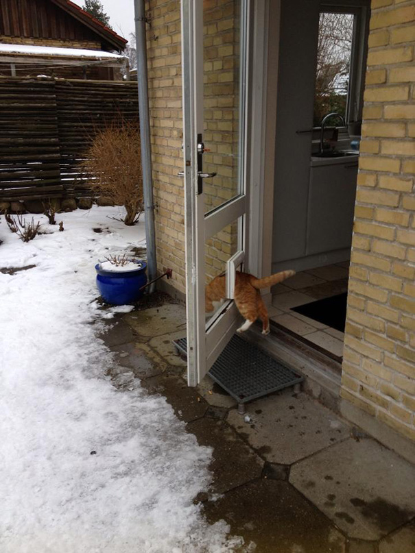 Cat-logic18__605