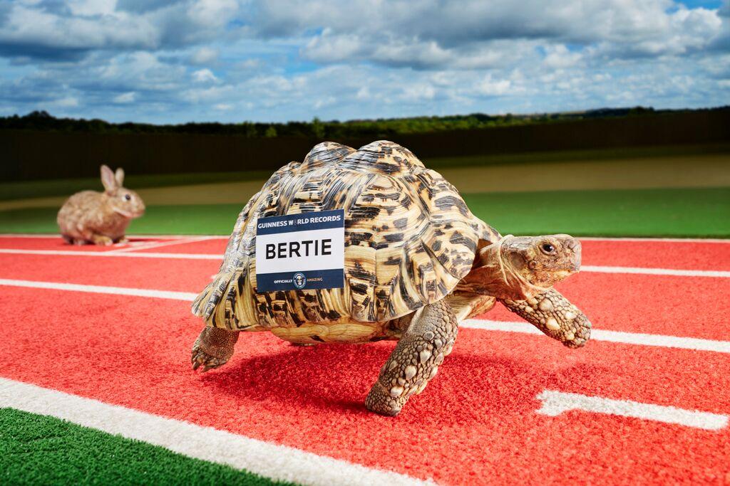snelsteschildpad