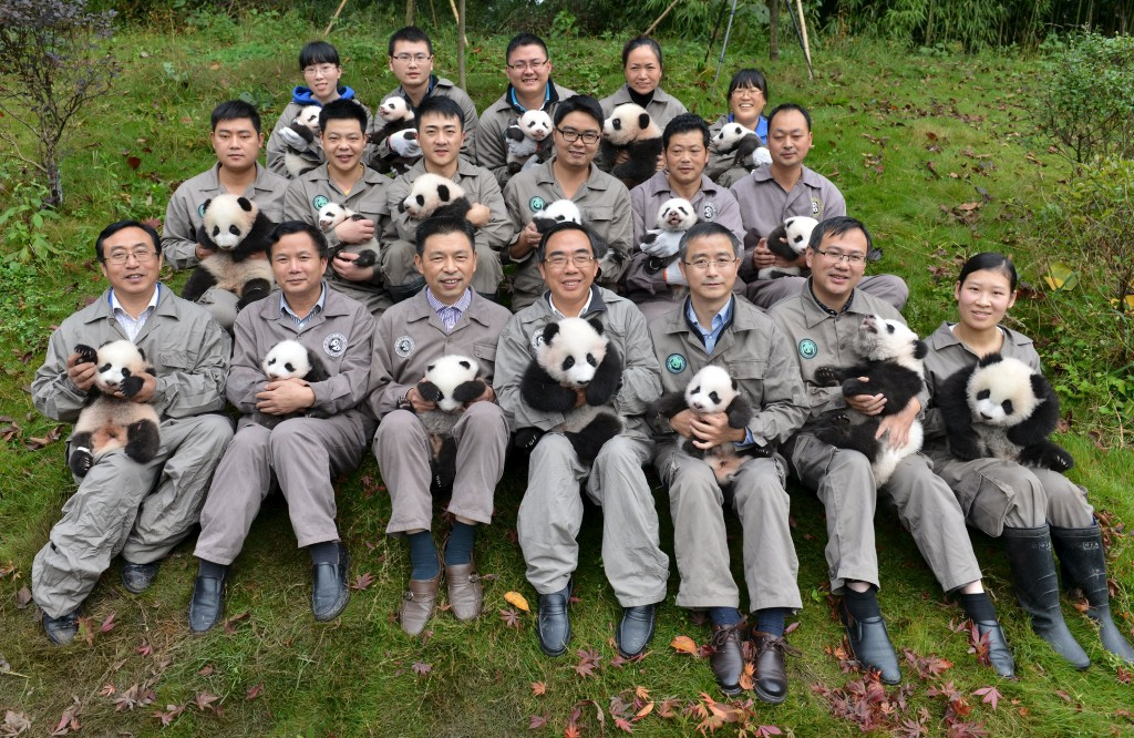 People holding baby pandas born in 2015 pose during a photo opportunity at a giant panda breeding centre in Ya'an, Sichuan province, China, October 24, 2015. About 18 pandas born in 2015 were shown to media at the centre last Saturday. Picture taken October 24, 2015. REUTERS/Stringer CHINA OUT. NO COMMERCIAL OR EDITORIAL SALES IN CHINA