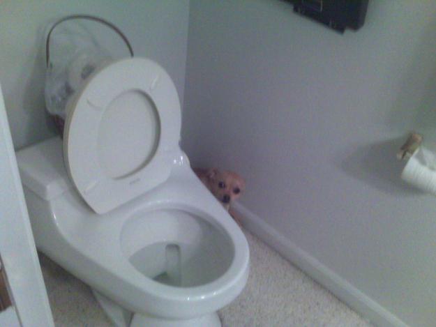 hide_toilet