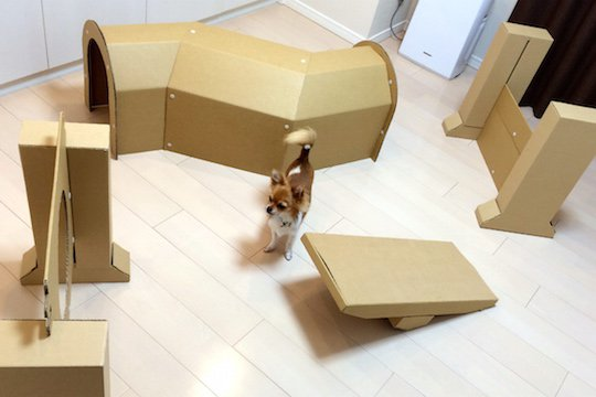 dog-show-contest-obstacle-course-cardboard-home-1