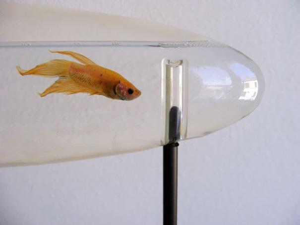 creative-aquariums-11-2