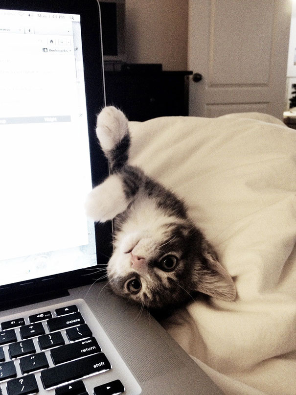 funny-cats-being-jerks-35__605