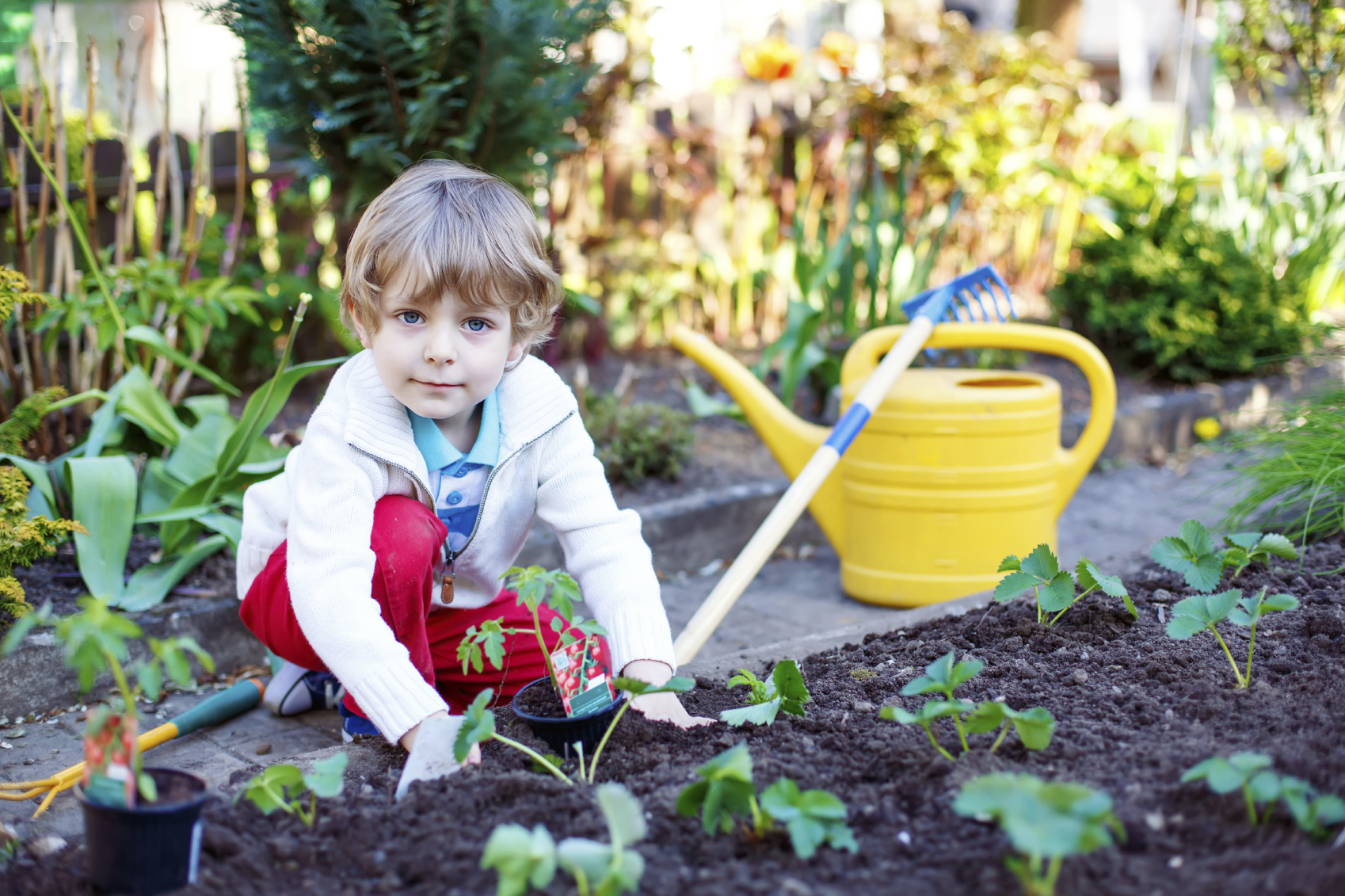 Happy kid boy planting seeds of tomatoes