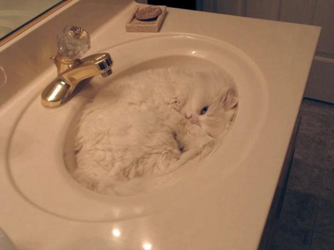 156055-15-preuves-irrefutables-que-les-chats-sont-liquides-4-650-adf40cd42d-1478497343