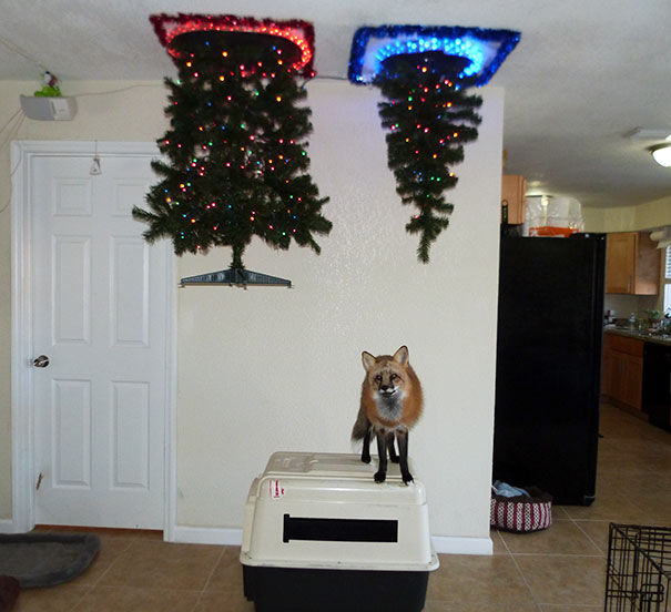 protecting-christmas-tree-from-dogs-cats-pets-17-585a73af7574f__605