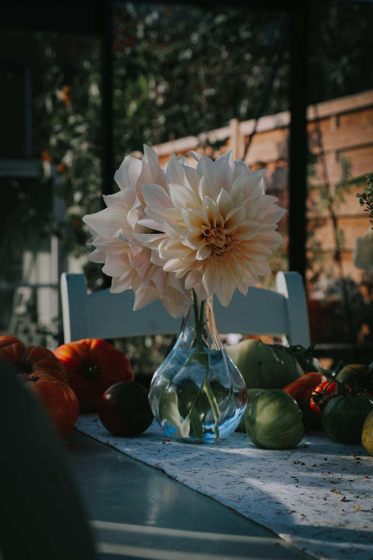 De bloem van 2021: de dahlia. Helemaal hip en te verkrijgen in ontelbare kleuren en tinten. (foto Angelo Dorny)