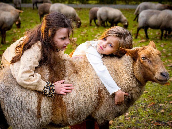 Op bezoek bij de herder.©luc daelemans luc daelemans