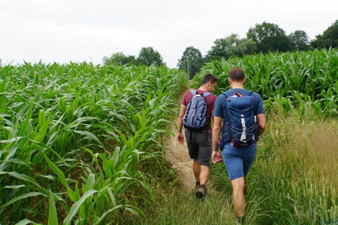 Het Pajottenland blijft ons verrassen: we wandelen langs trage wegen middenin de akkers, in het bos en langs kapelletjes. (foto MAF)
