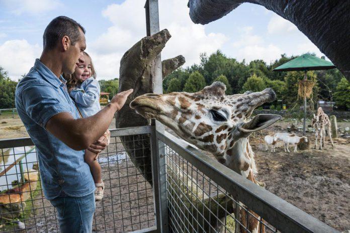 In het Pakawi Park kom je verrassend dicht bij de dieren. (foto TPA)©Mie De Backer