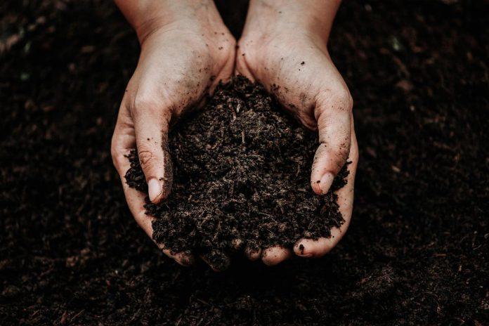 Compost is wel degelijk het zwarte goud. (Foto Angelo Dorny)©Team Patattekop